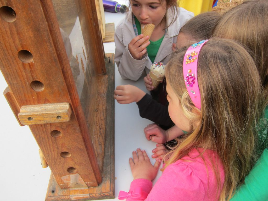 Children at Sanderson Academy check out a demonstration bee hive