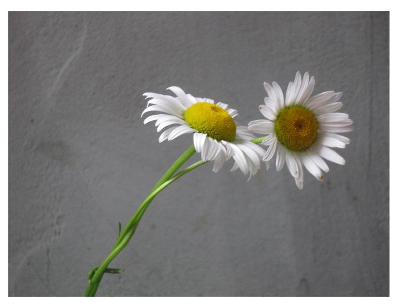 fleurs qui s'aiment